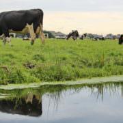 Proeftuin Veenweiden bodembeheer