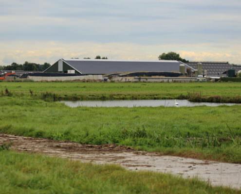 melkveehouders aan de slag in Proeftuin Veenweiden