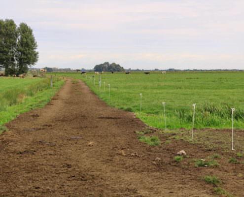 weidepad bij Wouter Beukeboom, pilotboer Proeftuin Veenweiden