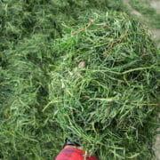 gras uit de kuil