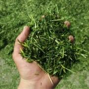 Proeftuin Veenweiden gemaaid gras